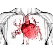 Vital Signs: Understanding What the Body Is Telling Us