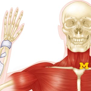 Anatomy_course_msk