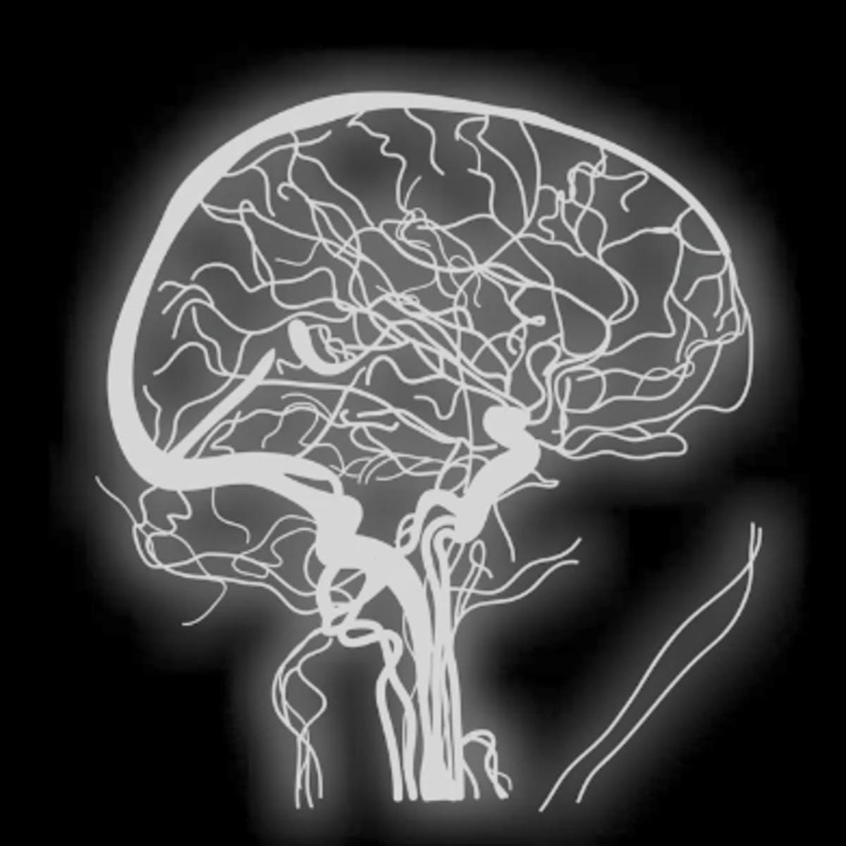 Fundamental Neuroscience for Neuroimaging | Coursera