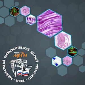 Строение биологических тканей для моделирования в биомедицинской физике
