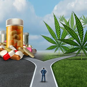Cannabis, Chronic Pain, and Related Disorders