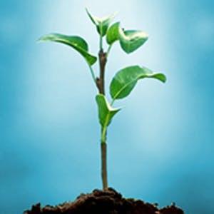 Understanding Plants - Part II: Fundamentals of Plant Biology