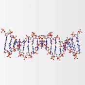 Генетика (Genetics)