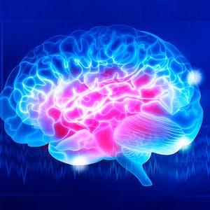 Introducción a la Neurociencia
