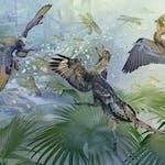 Paleontology: Theropod Dinosaurs and the Origin of Birds