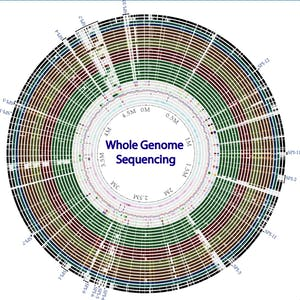 UNLV Online Courses Whole genome sequencing of bacterial genomes - tools and applications for University of Nevada-Las Vegas Students in Las Vegas, NV