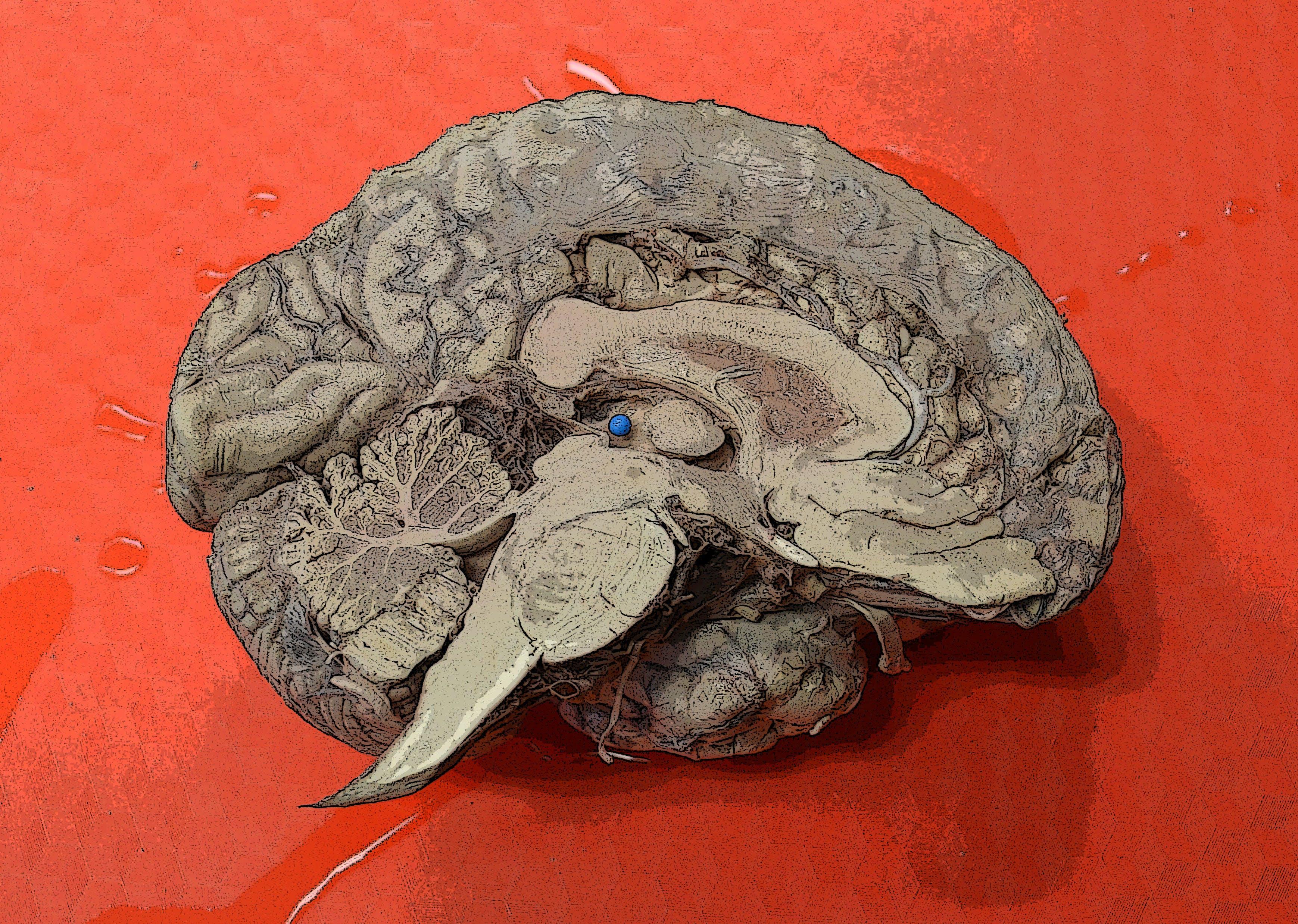 了解大脑:日常生活中的神经生物学