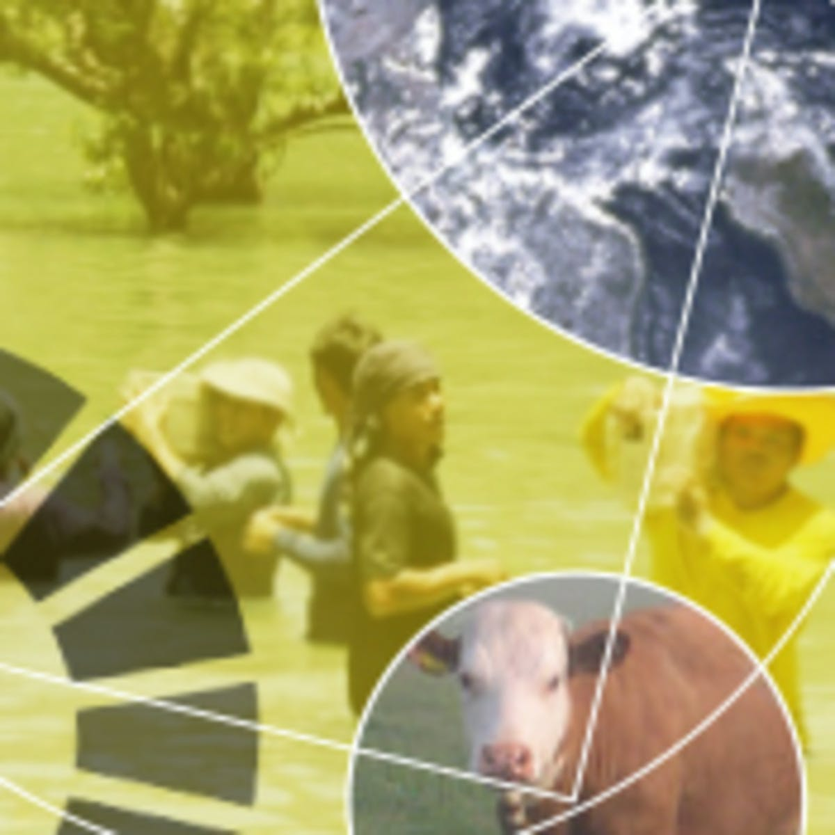 The Sustainable Development Goals – A global, transdisciplinary vision for the future