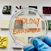 Biology Everywhere Foundations