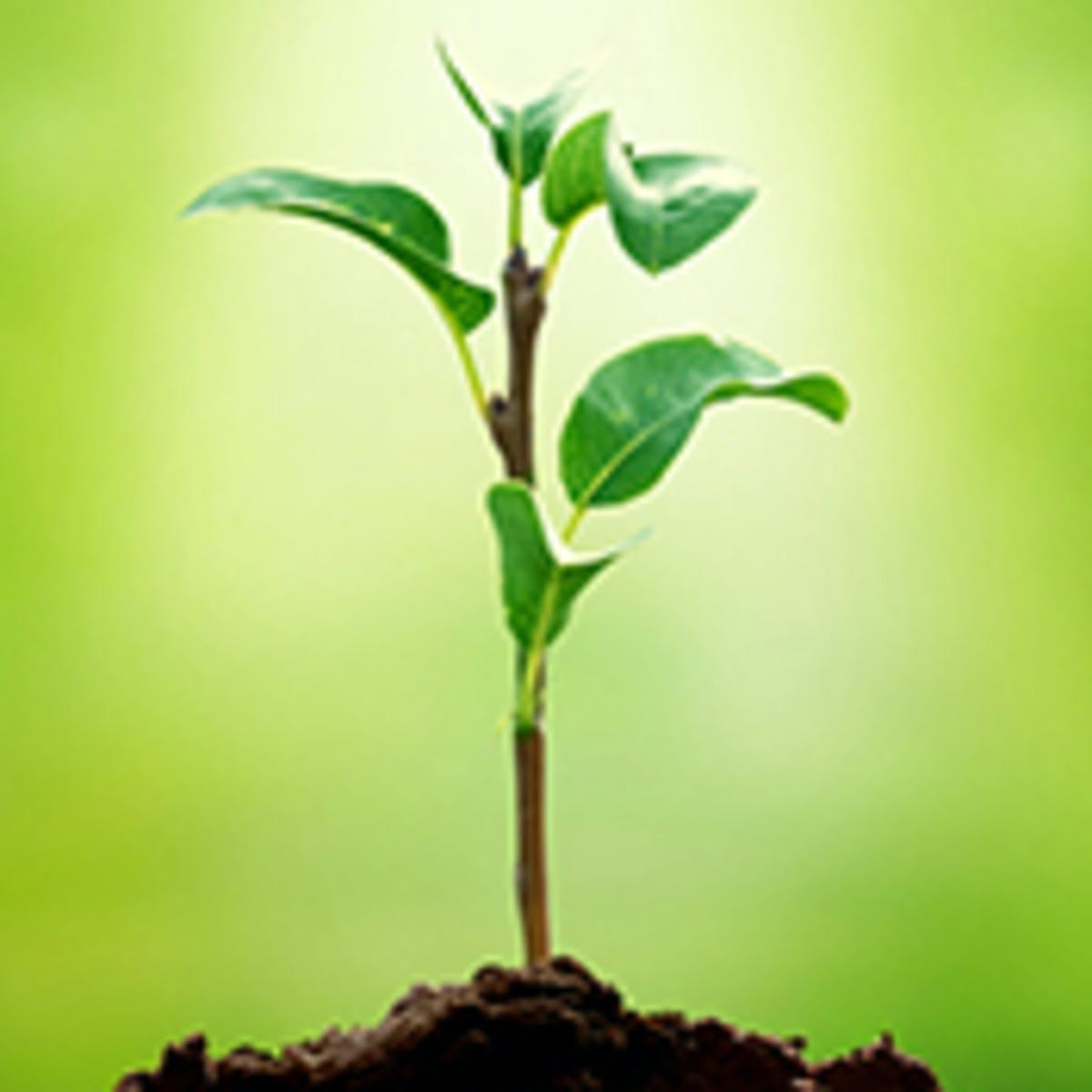 Understanding Plants - Part I: What a Plant Knows