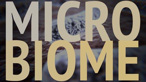 Explorando seu microbioma