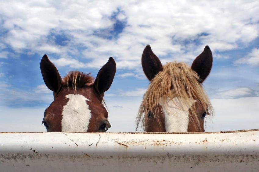 马的课程:基本护理和管理介绍