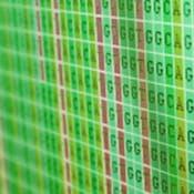 Plant Bioinformatics Capstone