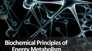 Biochemical Principles of Energy Metabolism