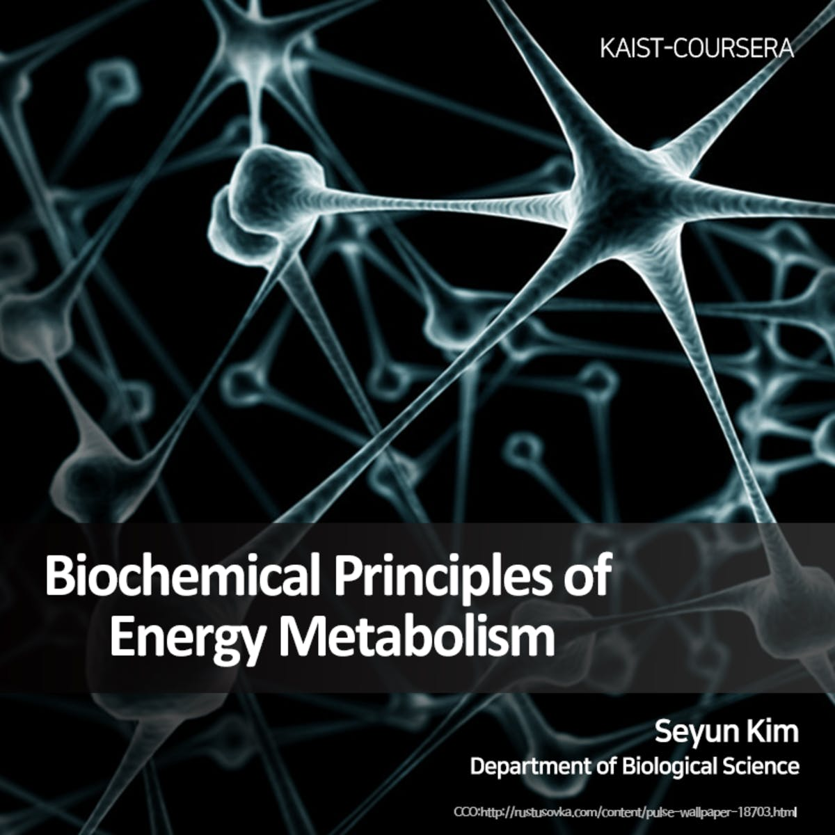 Biochemical Principles of Energy Metabolism