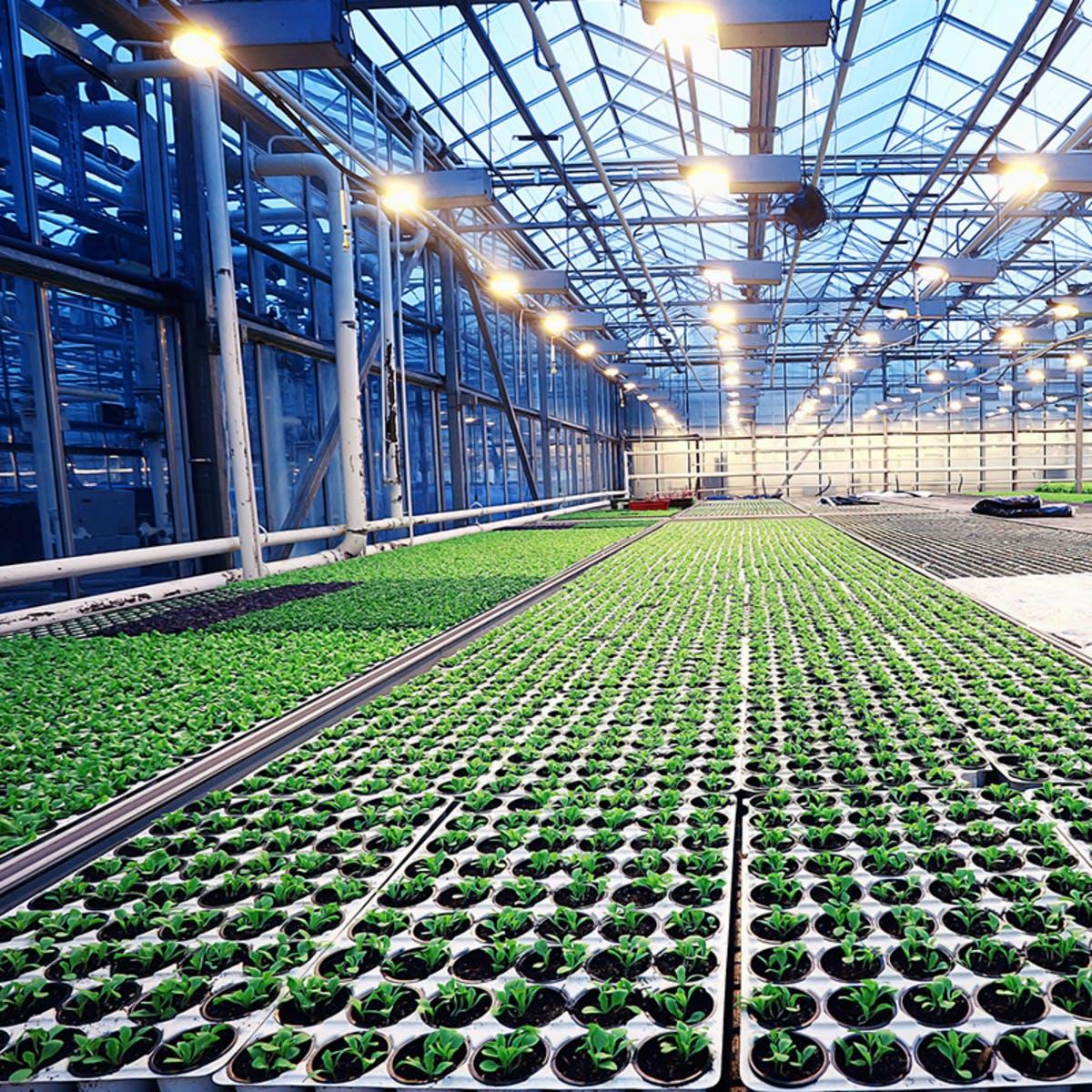 Metodologia de Sistemas Agroindustriais