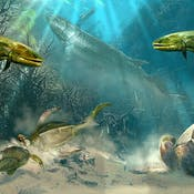 Paleontology: Early Vertebrate Evolution