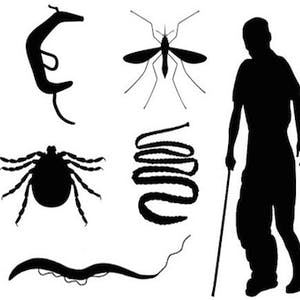 CWU Online Courses Tropical Parasitology: Protozoans, Worms, Vectors and Human Diseases for Central Washington University Students in Ellensburg, WA