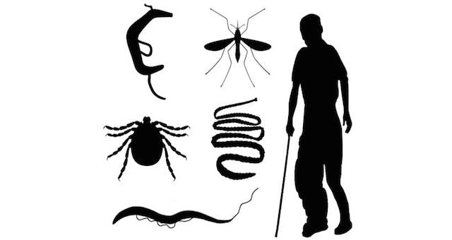 Tropical Parasitology: Protozoans, Worms, Vectors and Human Diseases
