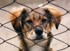 动物行为与福利
