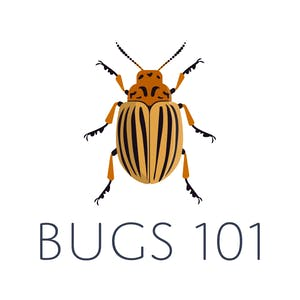 UNF Online Courses Bugs 101: Insect-Human Interactions for University of North Florida Students in Jacksonville, FL