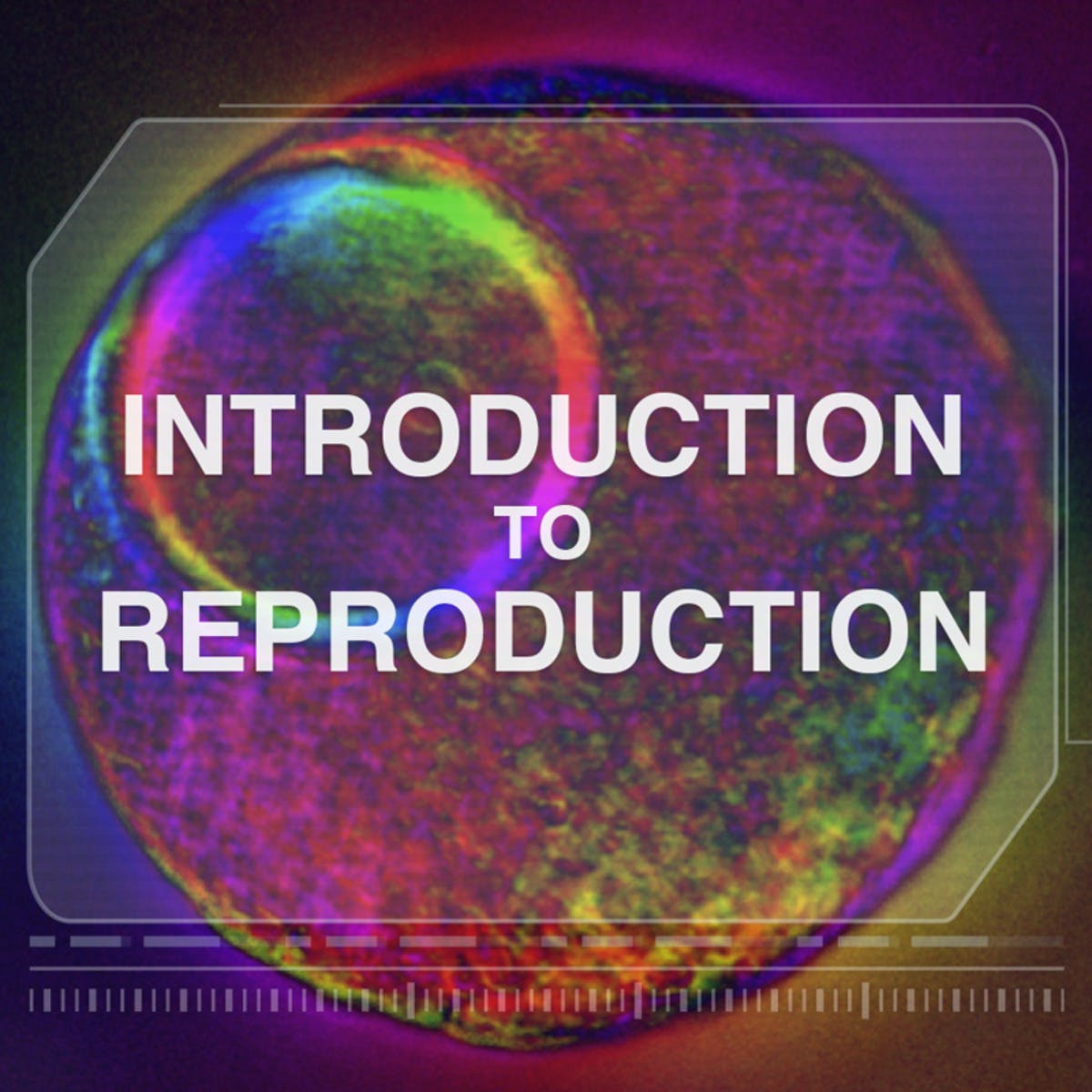 Introduction to Reproduction