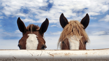 The Horse Course: Introduction to Basic Care and Management