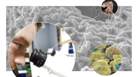 Bacteria and Chronic Infections