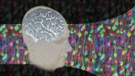Neuroscience: Perception, Action and the Brain Capstone