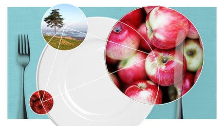 The New Nordic Diet - from Gastronomy to Health