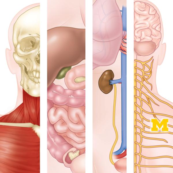 Anatomy specialization 1x1