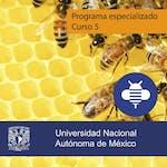 Estratégicos empresariales: Proyecto final by Universidad Nacional Autónoma de México