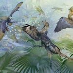 Paleontology: Theropod Dinosaurs and the Origin of Birds by University of Alberta