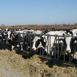Dairy Production and Management by The Pennsylvania State University