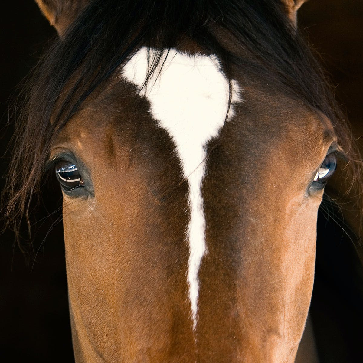 Equine Welfare and Management