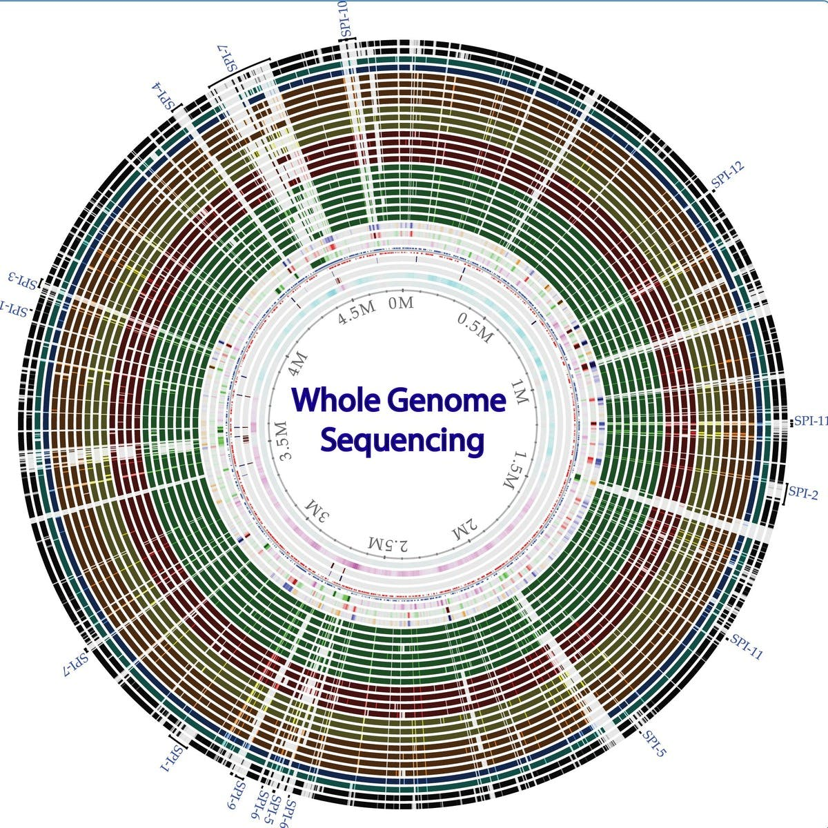 Whole genome sequencing of bacterial genomes - tools and applications