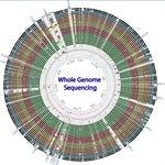 Whole genome sequencing of bacterial genomes - tools and applications by Technical University of Denmark (DTU)