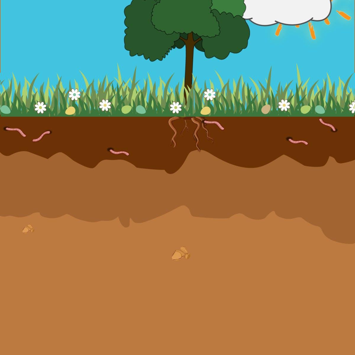Жизнь в почве