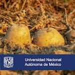 Seguridad agroalimentaria by Universidad Nacional Autónoma de México