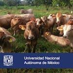 Sistemas agrosilvopastoriles: una alternativa climáticamente inteligente para la ganadería by Universidad Nacional Autónoma de México