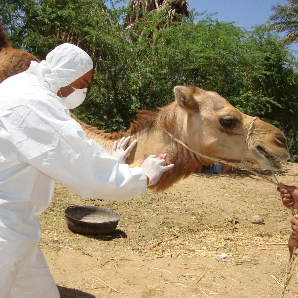 Global Health at the Human-Animal-Ecosystem Interface