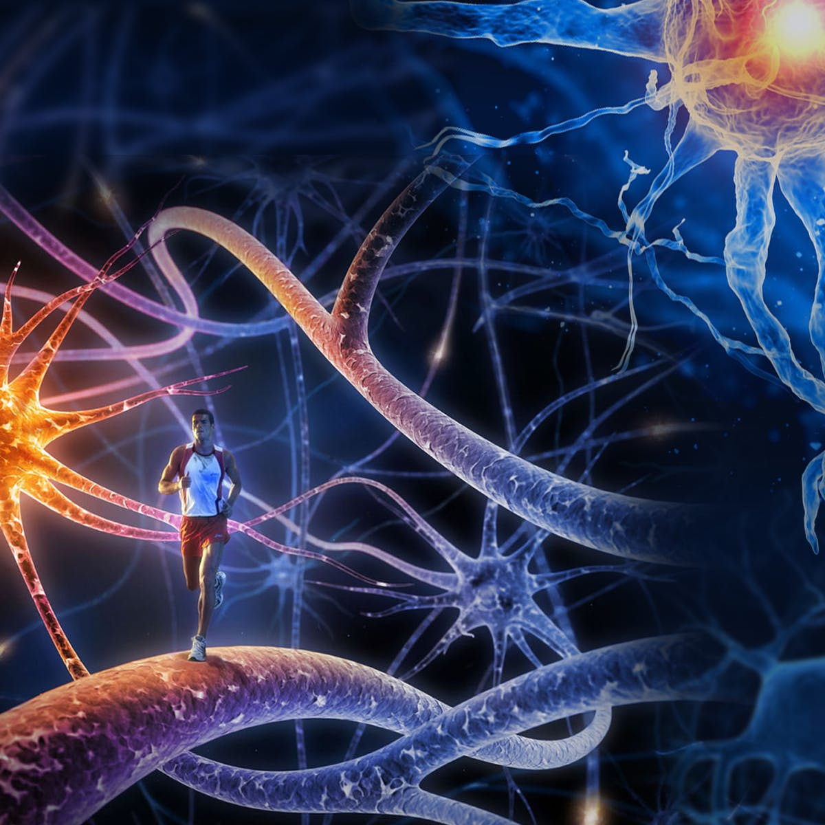 Advanced Neurobiology I