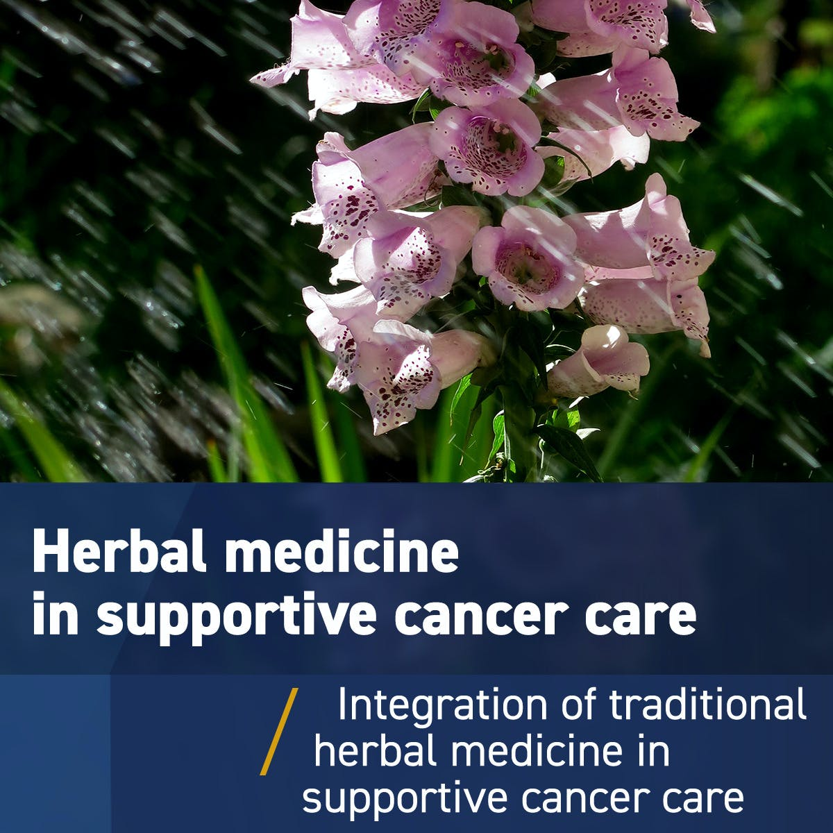 Traditional herbal medicine in supportive cancer care: From alternative to integrative